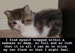 poor little kitty Emo-1