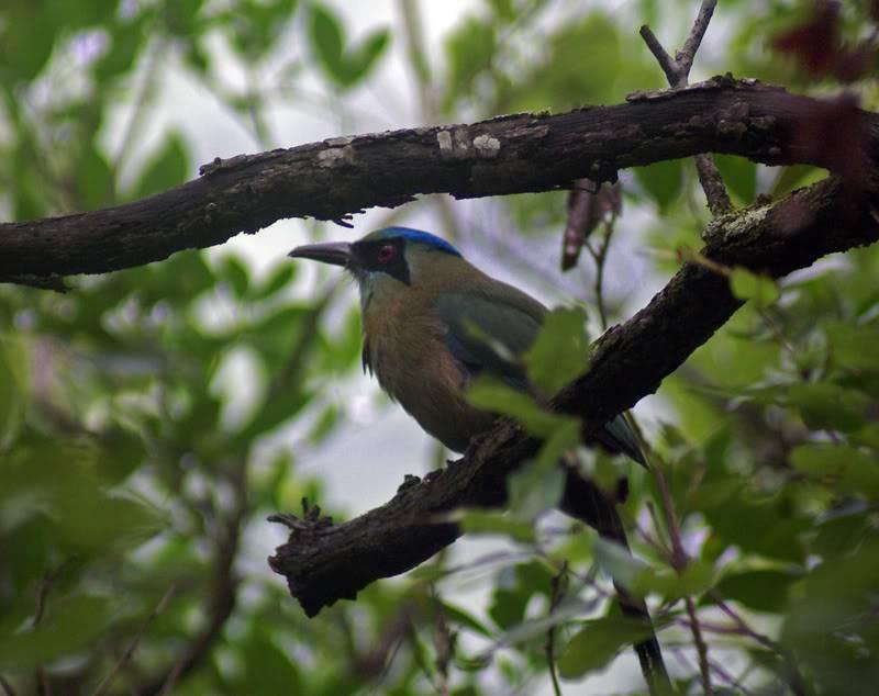 Une autre espèce se dirige vers l'extinction Birdcriaa