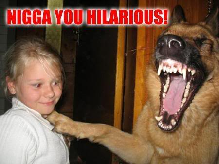 Random Picture of the Day 2.0 Loldog