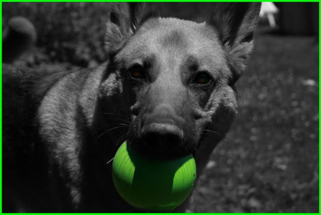 Ball Crazy! Spook_green