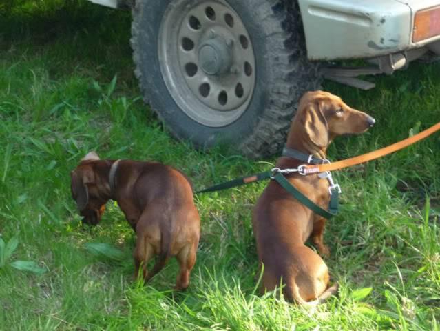 Encuentro con perros en Luarca P1030049_P