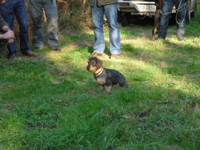 Encuentro con perros en Luarca P1030051_P