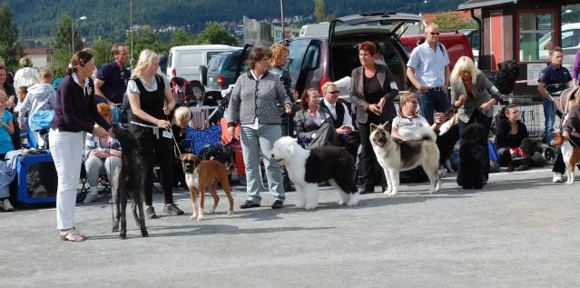 Norsk leonberger klubb, Drammen 28/8 Utstilling039