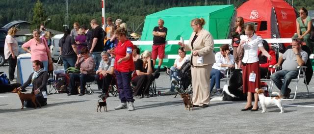 Norsk leonberger klubb, Drammen 28/8 Utstilling040