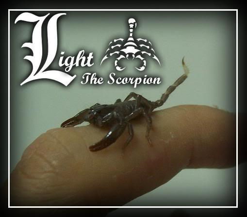 My Heterometrus Spinifer Scorpling Light