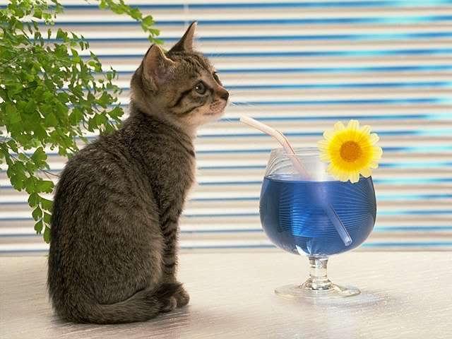 Maji svatki za gnjaviti...[Ne zamerite mi...] Drink