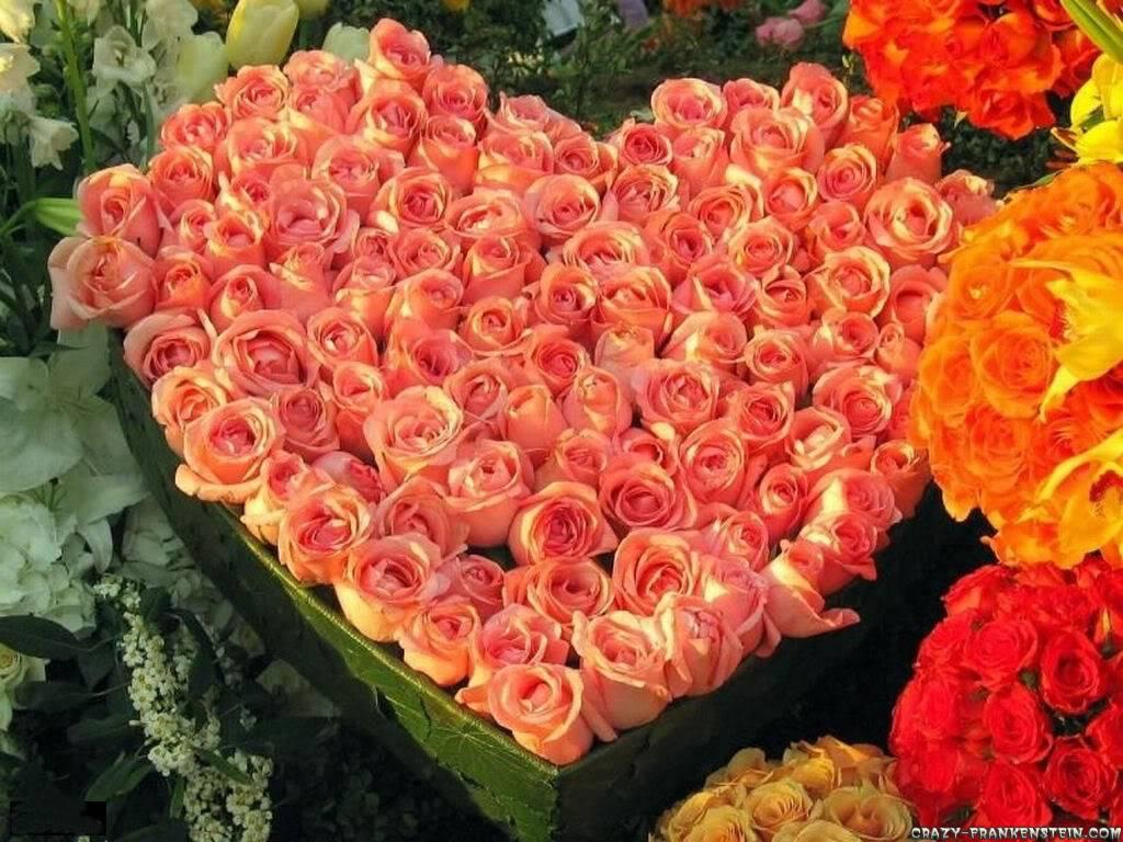CASTIGATORI CONCURS !!!!!!!!!!!!!! Roses-valentine-wallpaper