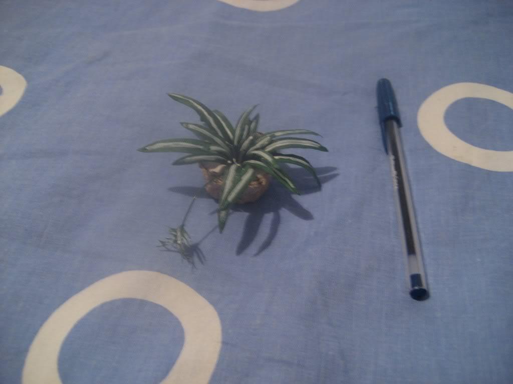 Plantas para casa de muñecas Imageneva014