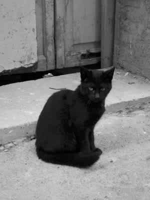 Je veux !!!!! Le_chat_noir_by_CisneNegro