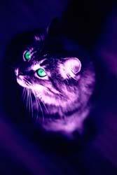Dreadpath's Kitties!!  Purplecat