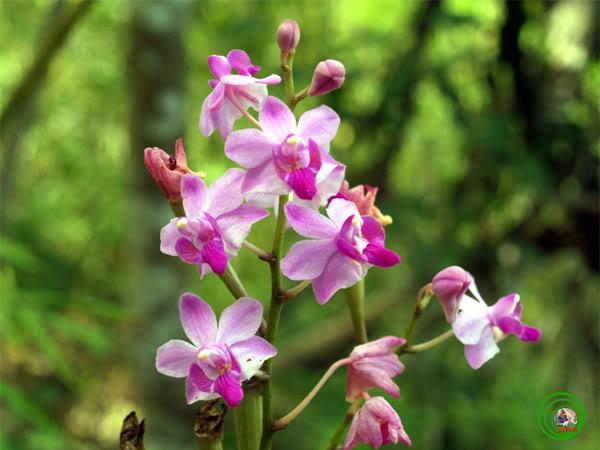 Hoa lan - Đẹp rất nhiều so với lan của Triết :D 5
