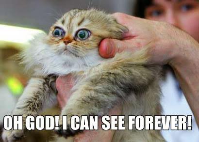 Pazzi come gatti Seecat