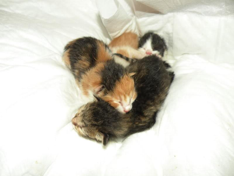 Αρχίσαμε και φέτος....(παρατημένα γατάκια) 005-2
