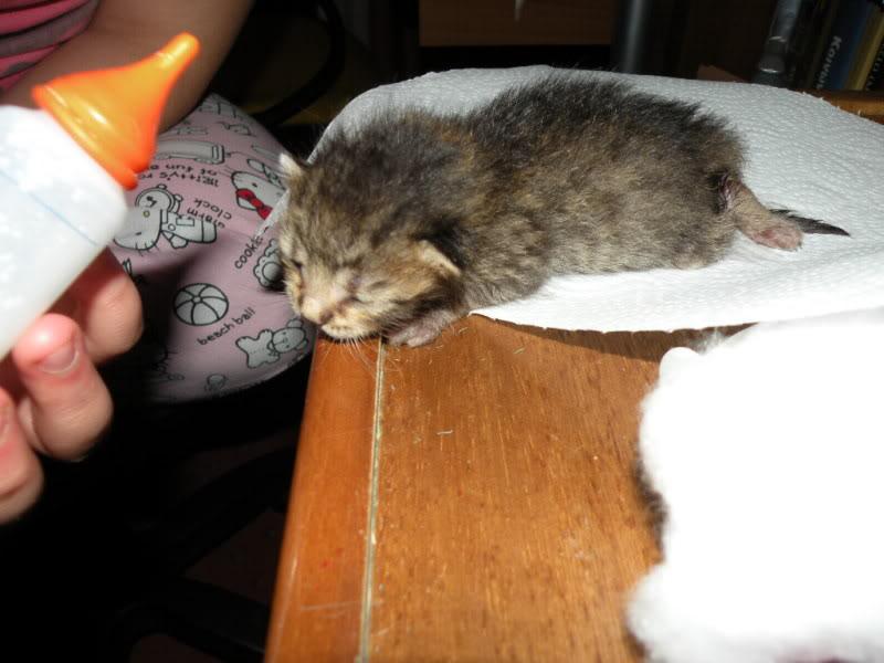 Αρχίσαμε και φέτος....(παρατημένα γατάκια) - Σελίδα 3 DSCN0659