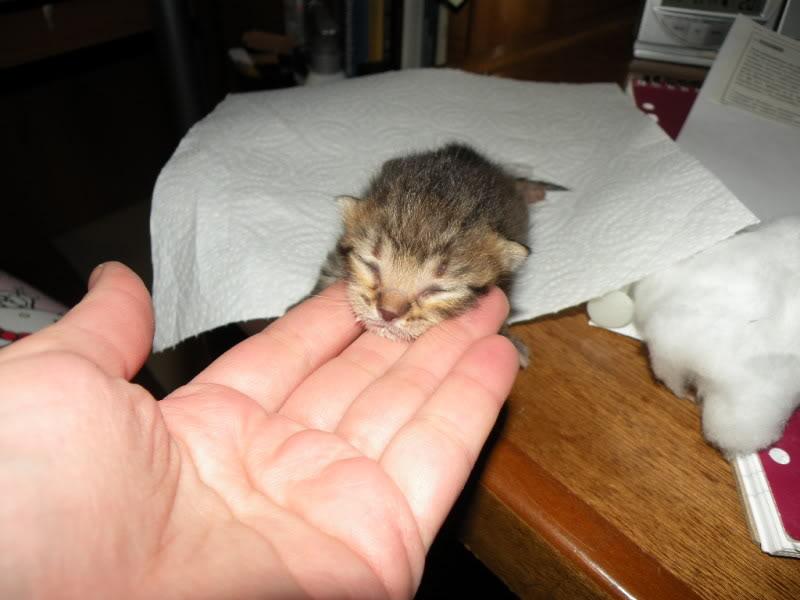 Αρχίσαμε και φέτος....(παρατημένα γατάκια) - Σελίδα 3 DSCN0660