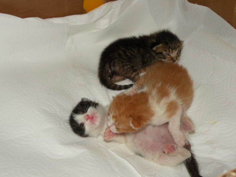 Αρχίσαμε και φέτος....(παρατημένα γατάκια) - Σελίδα 3 DSCN0682