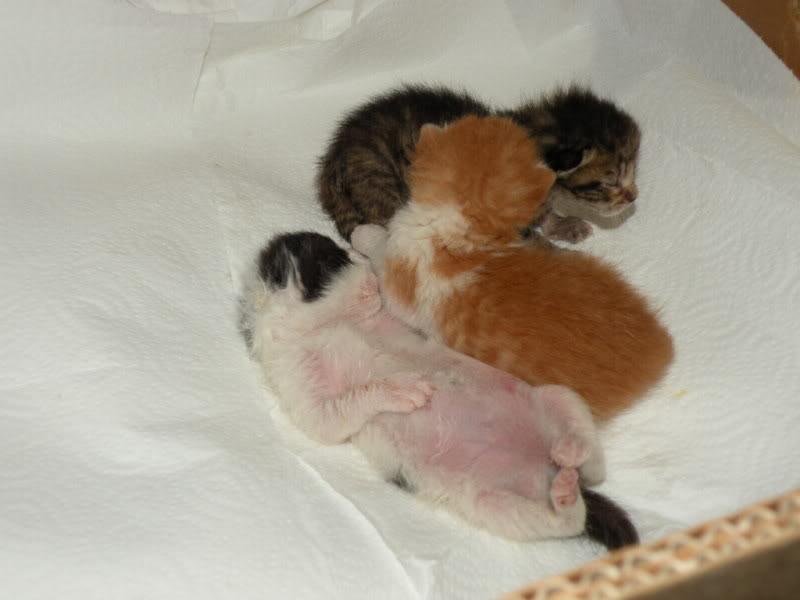 Αρχίσαμε και φέτος....(παρατημένα γατάκια) - Σελίδα 3 DSCN0684