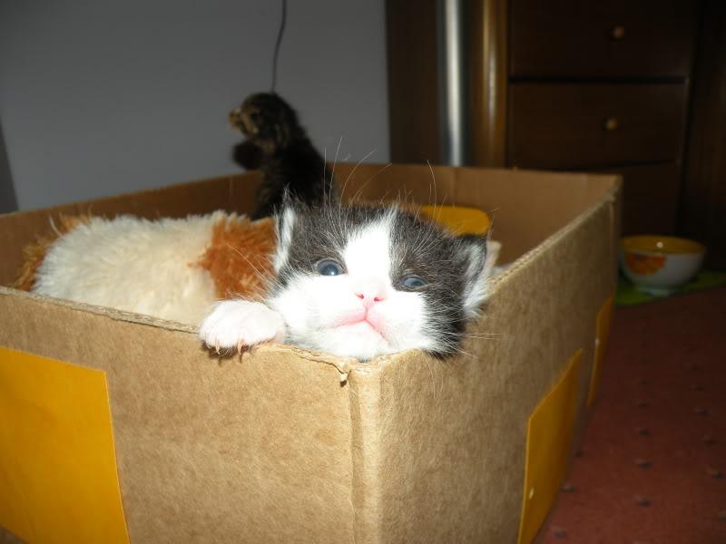 Αρχίσαμε και φέτος....(παρατημένα γατάκια) - Σελίδα 4 DSCN0746