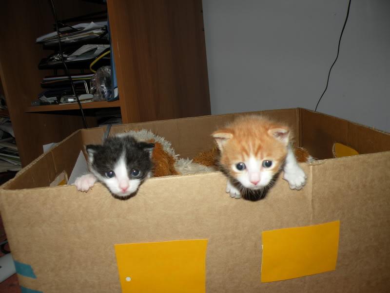 Αρχίσαμε και φέτος....(παρατημένα γατάκια) - Σελίδα 4 DSCN0750