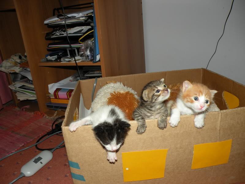 Αρχίσαμε και φέτος....(παρατημένα γατάκια) - Σελίδα 4 DSCN0751