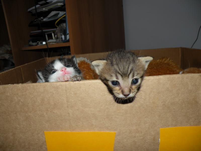 Αρχίσαμε και φέτος....(παρατημένα γατάκια) - Σελίδα 4 DSCN0754