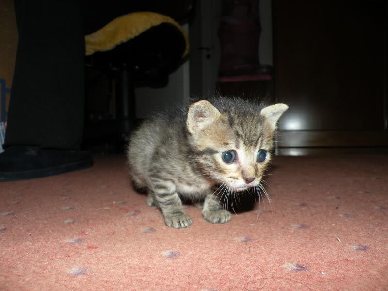 Αρχίσαμε και φέτος....(παρατημένα γατάκια) - Σελίδα 4 DSCN0766