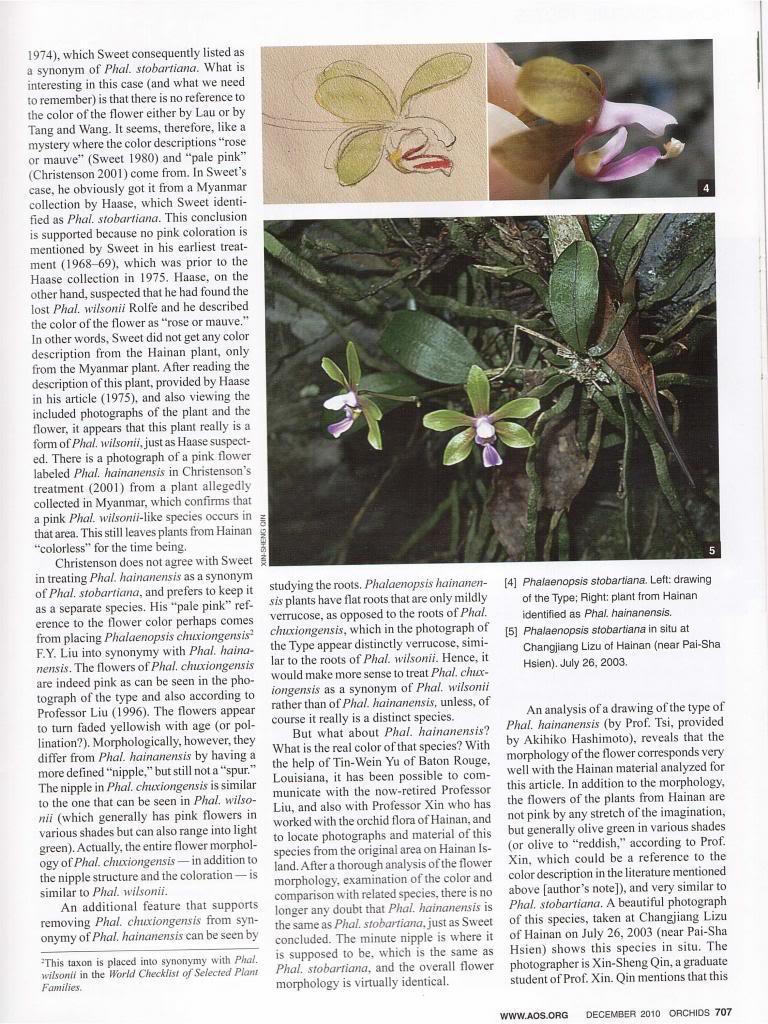 Discussion autour de Phalaenopsis stobartiana, braceana, taenialis et honghenensis Orchids_79_12_2010_707_zpsa9cefcc0