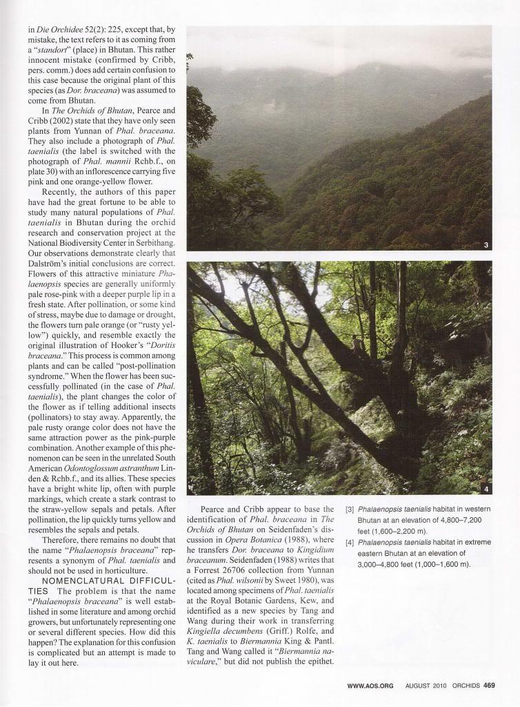 Discussion autour de Phalaenopsis stobartiana, braceana, taenialis et honghenensis Orchids_79_8_2010_469_zps293be54b