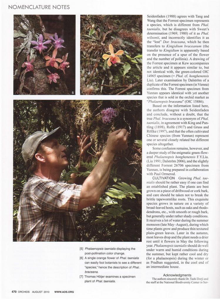 Discussion autour de Phalaenopsis stobartiana, braceana, taenialis et honghenensis Orchids_79_8_2010_470_zps89df5389