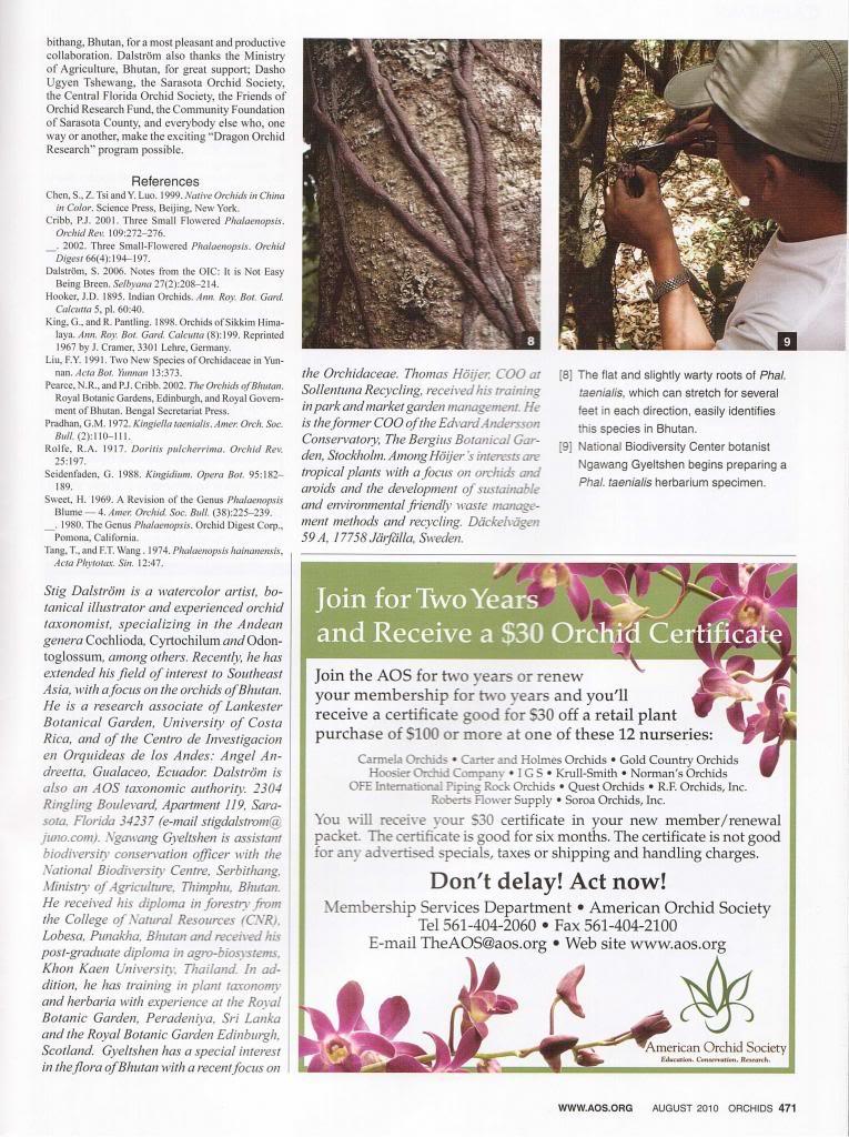 Discussion autour de Phalaenopsis stobartiana, braceana, taenialis et honghenensis Orchids_79_8_2010_471_zps27b440ff