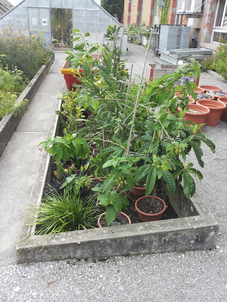 """Projet de """"tourbière"""" pour plantes carnivores 20130917_161601_zpsd89e0b09"""