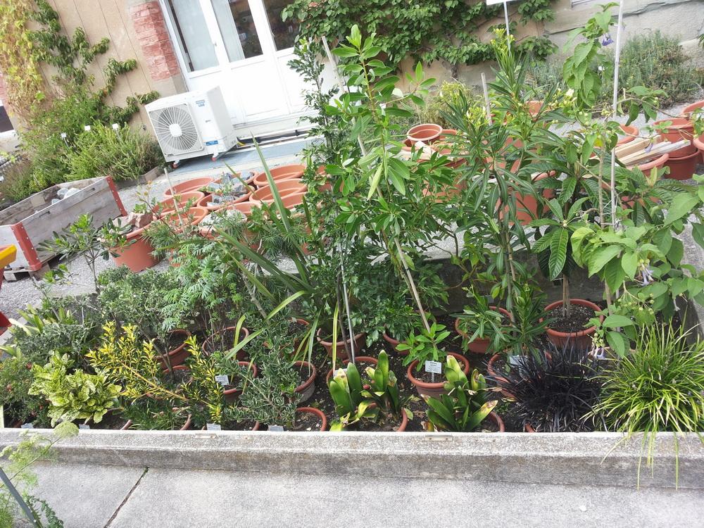 """Projet de """"tourbière"""" pour plantes carnivores 20130917_161616_zps2a1a058c"""
