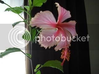 Japonezii mei forumul-florilor - Pagina 31 CIMG3630