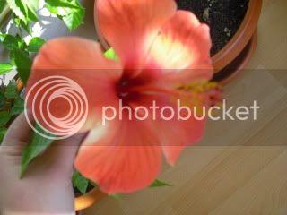 Japonezii mei forumul-florilor - Pagina 31 CIMG3636