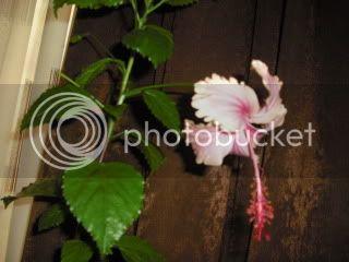 Japonezii mei forumul-florilor - Pagina 33 CIMG3657