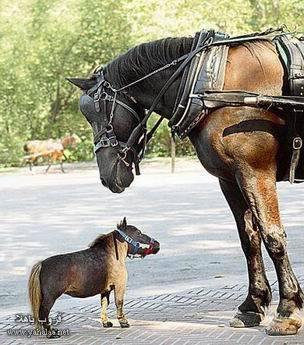 حصان غلبان قوى Resizeofsmall_horse3