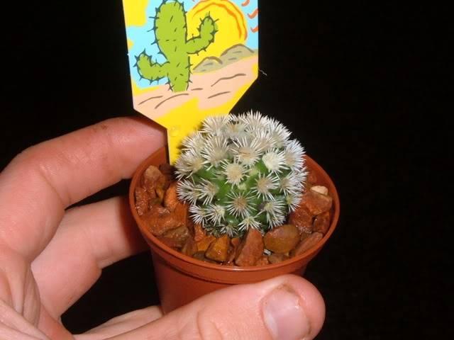 Bunnings cacti id DSCF5672