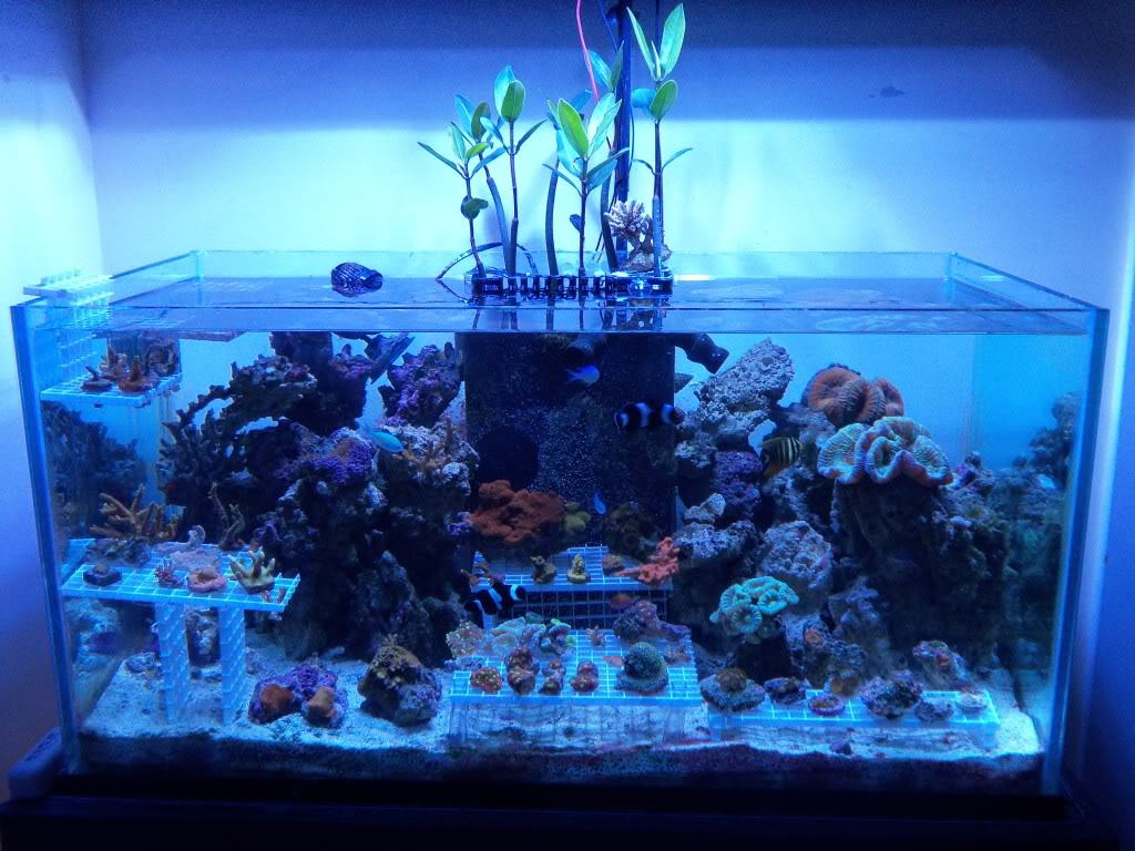 Mangroves as a natural method of filtration and means of ...