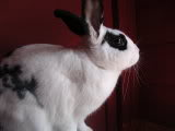 Forum Members Rabbits Picture130