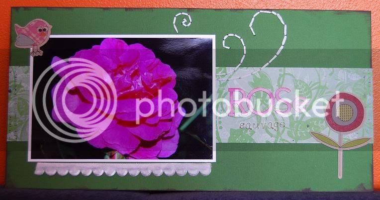 Annso35- 27 JUILLET-nouveauté Rosesauvage