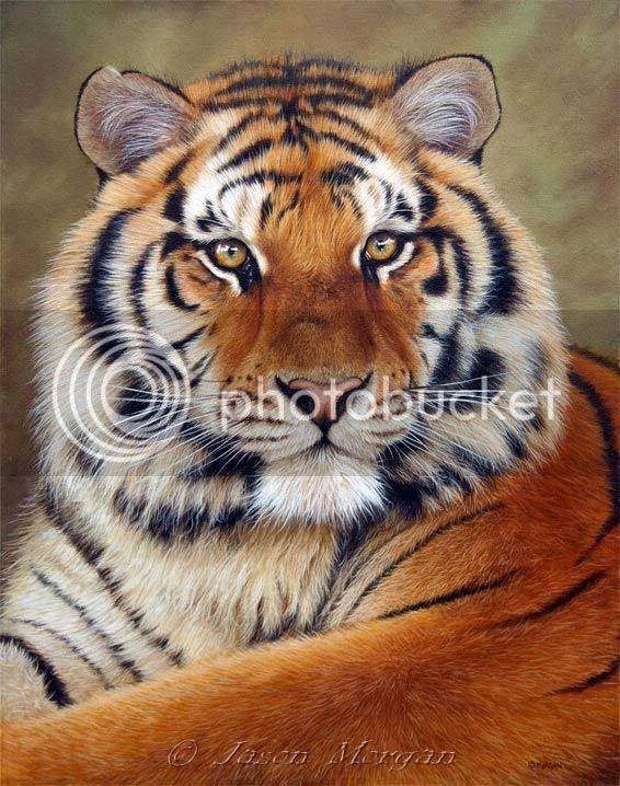 [b]My lOve[/b] Siberian-tiger-6