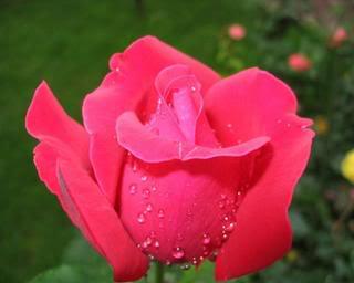Cammy - goblen galerie Flower_9