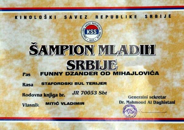 """Stafordski Bul Terijer - odgajivacnica - """"DZander"""" FCI-5044 FunnyDZanderOdMihajlovica22-Povelja"""