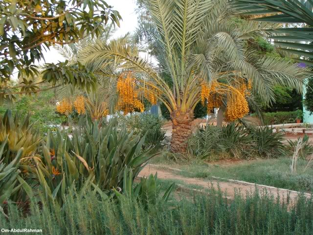 Libya - It's nature & culture LibyanFarm