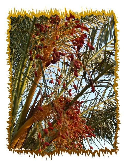 Libya - It's nature & culture RedDates
