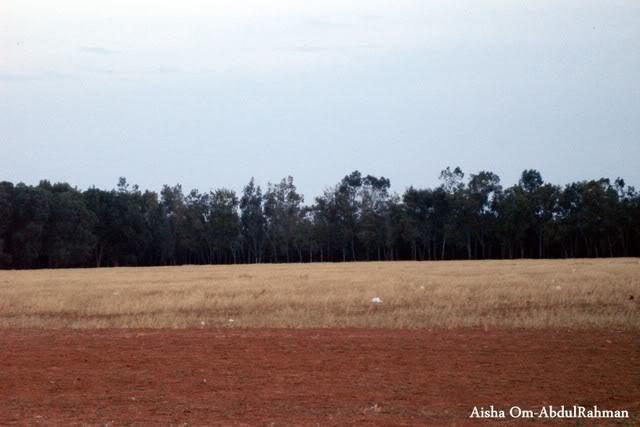 Libya - It's nature & culture Farmland