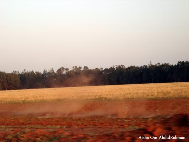 Libya - It's nature & culture - Page 2 Farmland02