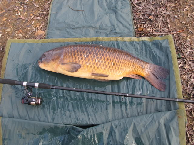 winter float fishing for carp Picture165