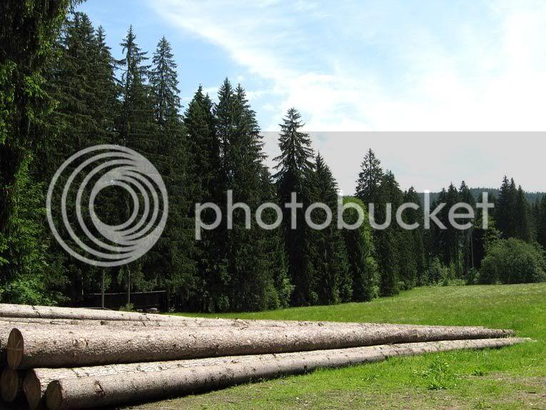 Поляната с дървета Good-Timber