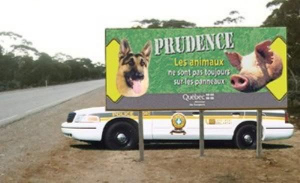 photo drole - Page 2 Prudence